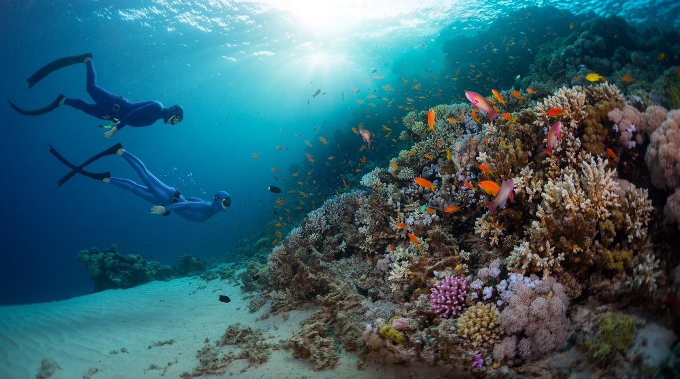 dalış sporu nedir