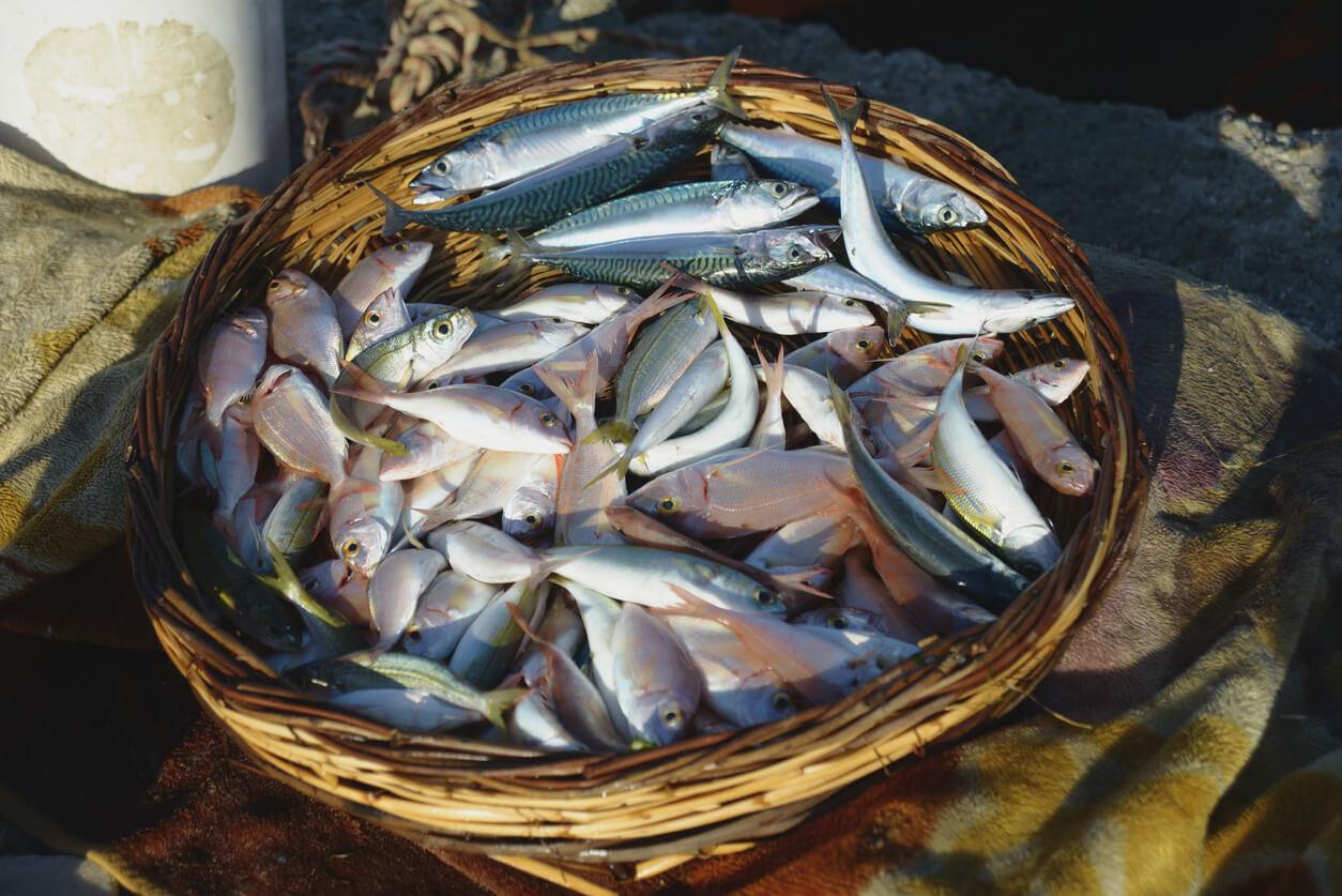 Balıkesir ne nerede yenir