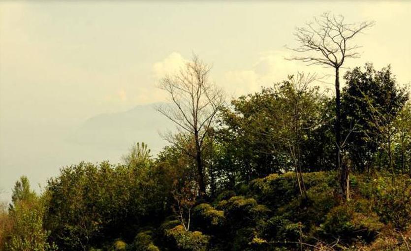 Hopa Çamburnu Tabiat Parkı