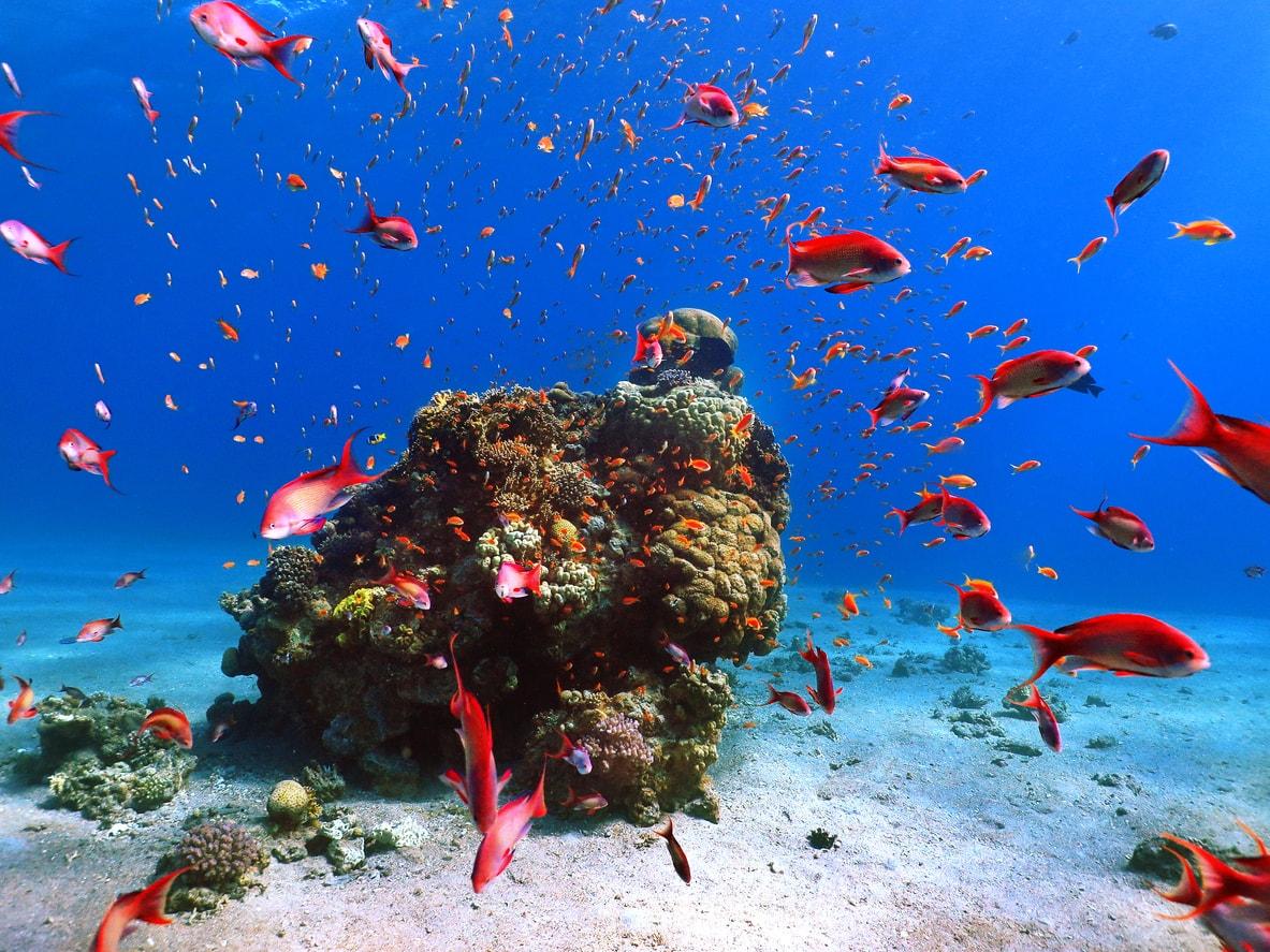 Hurghada kızıldeniz