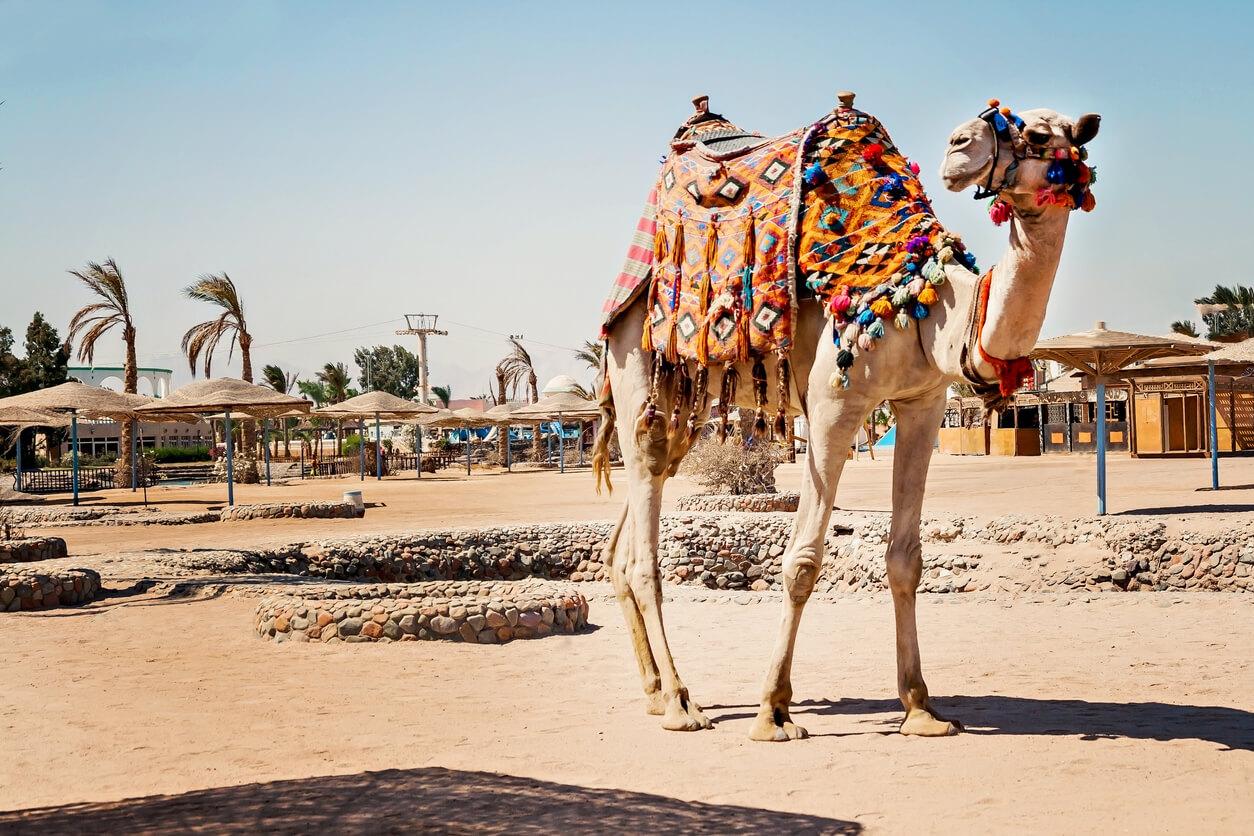 Şarm el şeyh deve ile ulaşım
